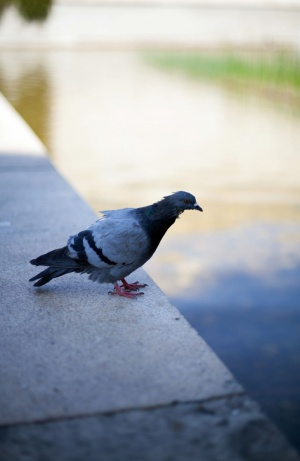Outros/Pigeon