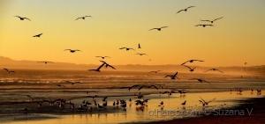 Outros/Concentração de gaivotas