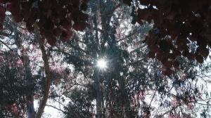 Paisagem Natural/Contemplar a natureza