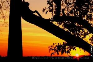 Paisagem Natural/Sol de fim de tarde