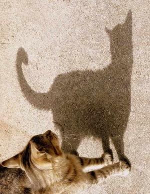 /Aki há gato