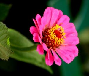 /Rosa & Amarelo