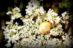 /Lençol de flores