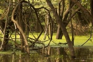 Paisagem Natural/Interior de um Igarapé no Rio Negro, Amazônia, Bra