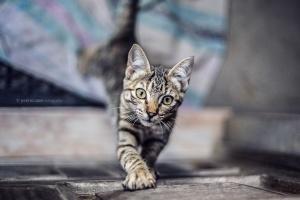 Animais/cats..