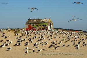 /Uma casinha na Praia