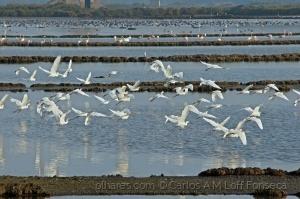 Animais/Estuary Herons