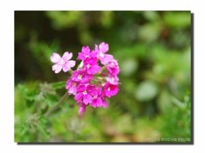 Macro/Flowers...
