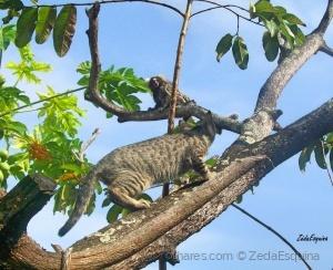 /A gata e o sagui....(pf. ler descrição)