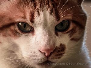/Mingau pelos olhos de sua Humana de Estimação