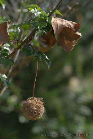 Paisagem Natural/Outono