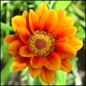/Mais uma flor...