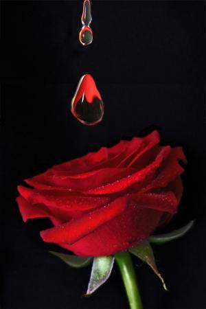 /Água de Rosas