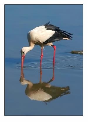 /Quantas patas?