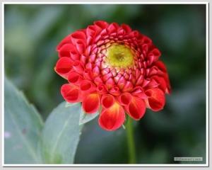 Outros/Hora de florir