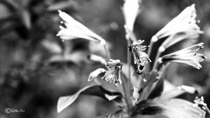 Outros/Jardim Botanico #6