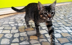 Animais/O gatinho de Moscavide