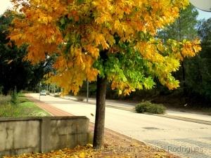 /uma árvore na terra onde moro....