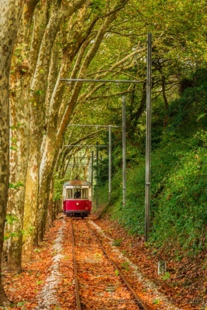 /Fall Tram