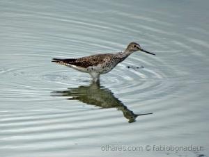 Paisagem Natural/Pássaro pescando