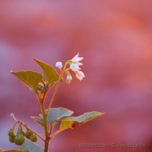 Paisagem Natural/Pink