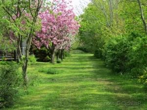 /Á procura da Primavera