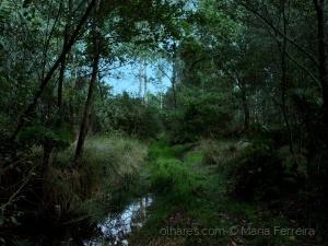 Outros/O som da natureza...