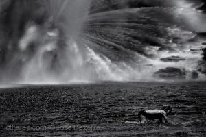 Fotojornalismo/Sejamos como a água...
