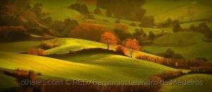 """Paisagem Natural/"""" Golden Green fields !!!"""