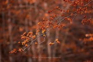 Paisagem Natural/Folhas de Outono