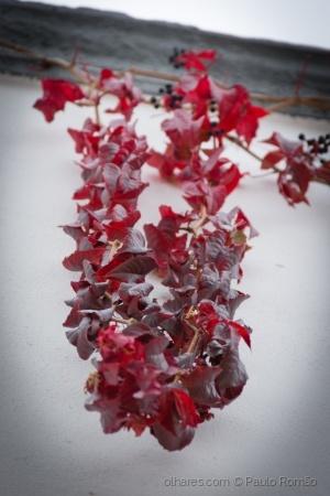 Paisagem Urbana/Folhas vermelhas