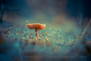 Macro/Endeless Dreams (LER)