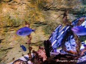 """/""""ADEPTOS DO DRAGÃO...Aquarium SEA*LIFE""""(Ler)"""