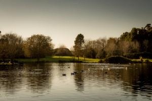 Paisagem Natural/O lago dos...patos.