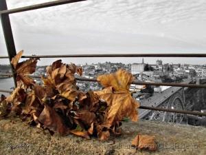 Arte Digital/Outono