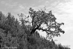 Outros/árvore