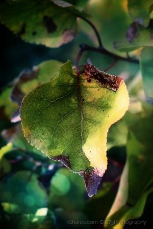Macro/last green