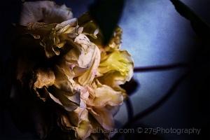 Macro/December Flowers