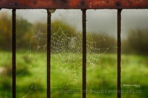 Outros/Wet Net