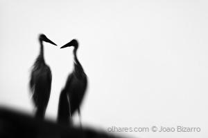 Animais/Love