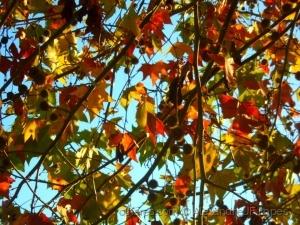 Paisagem Natural/Folhagem de Outono