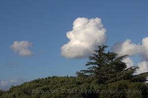Paisagem Urbana/O cedro e a nuvem
