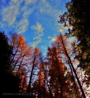 Paisagem Natural/línguas de fogo