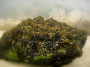 Paisagem Natural/Vidas num rochedo da praia...