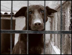 Animais/Cão velho entre grades