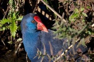 /Das mais belas aves de Portugal