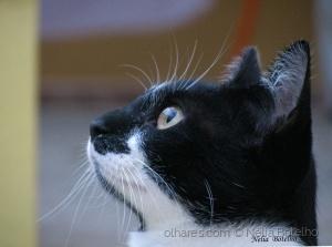 Animais/ Lila...muito atenta