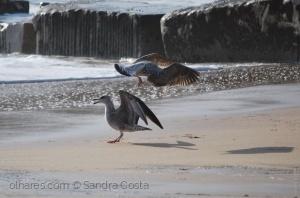/Kung fu de gaivotas