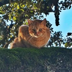/Gato da rua!