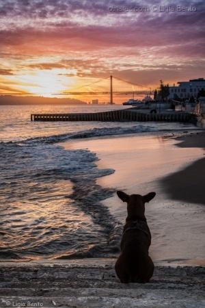 /a história do cão que gostava de ver o por do sol!